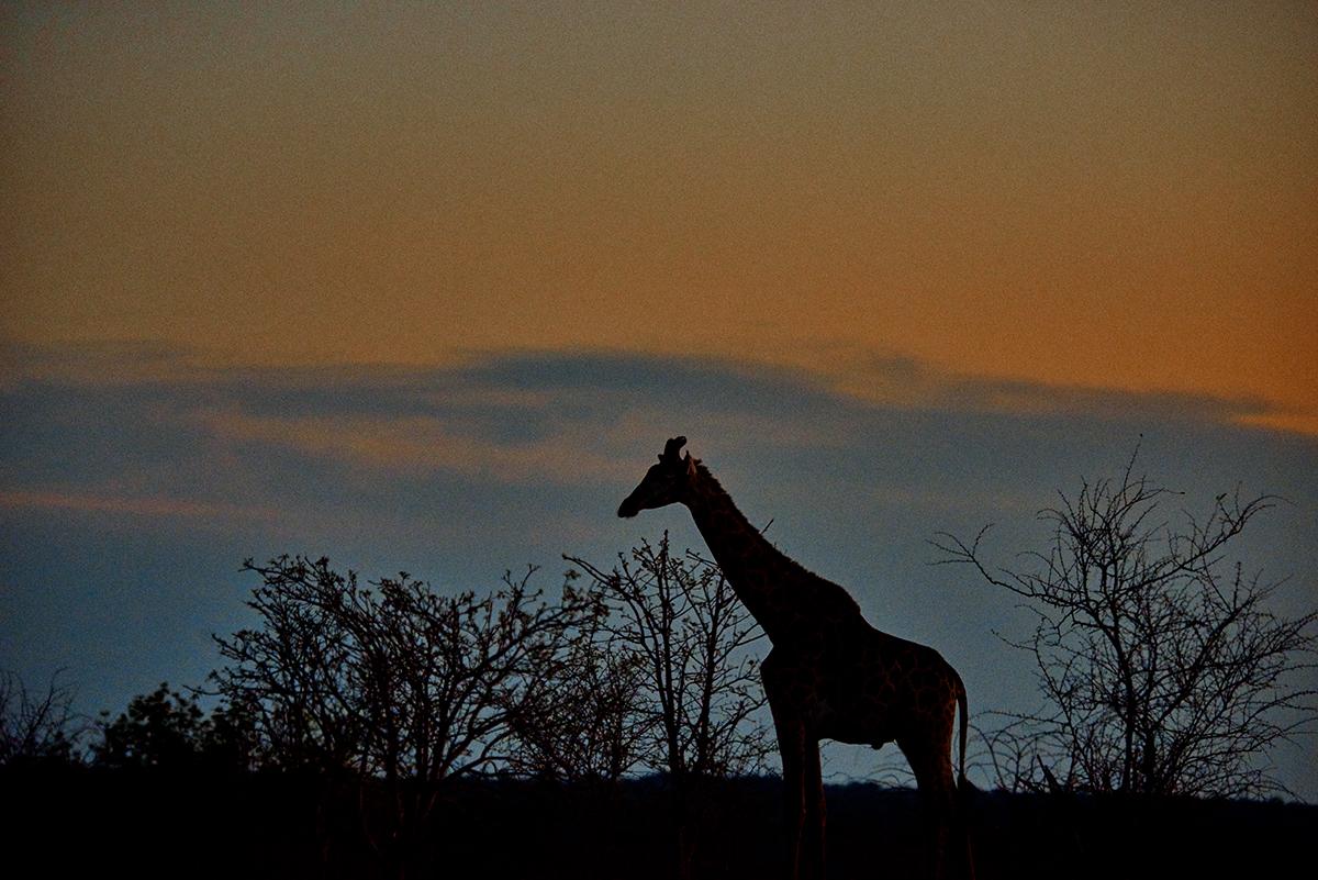 linnea-frank-giraff