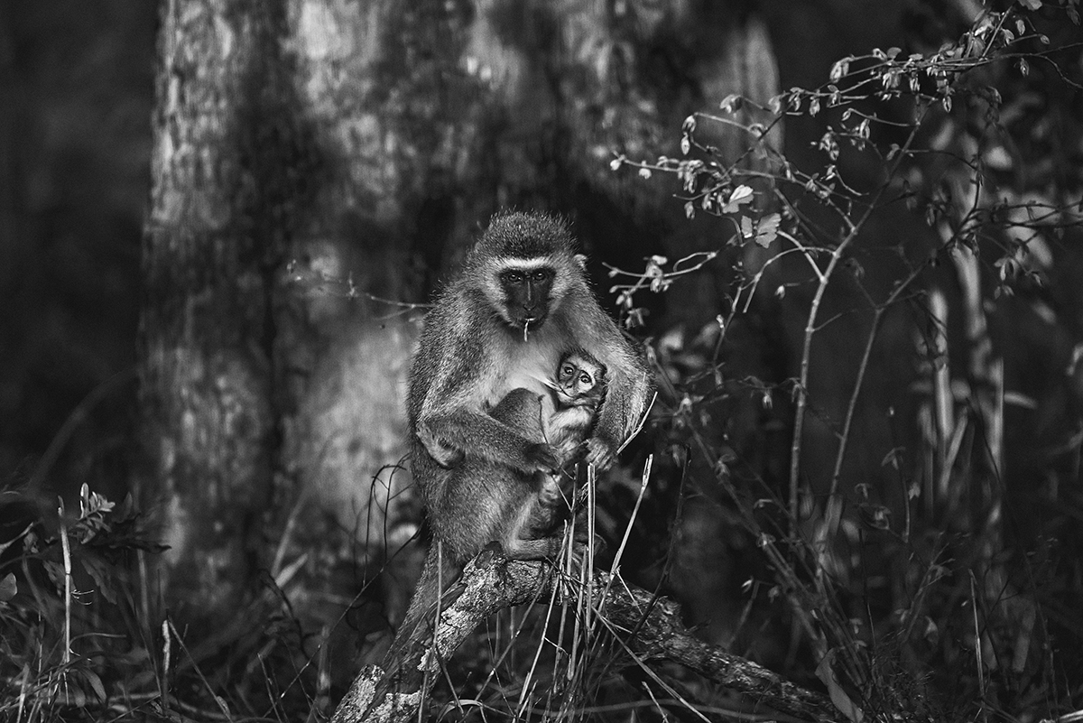 linnea-frank-monkey